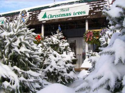 Christmas-tree-lot-snow